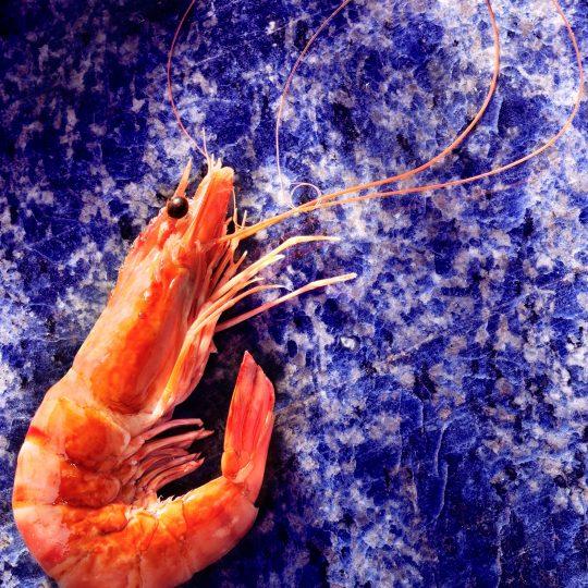 https://crisp.cc/wp-content/uploads/2015/04/Shrimp-540x540.jpg
